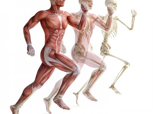 Curso de anatomía